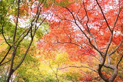 瑞宝寺公園.jpg