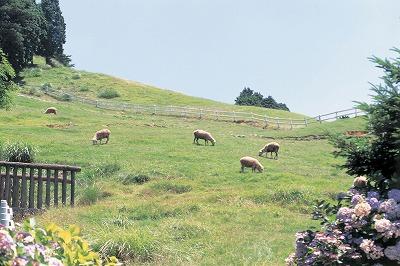 六甲山牧場.jpg
