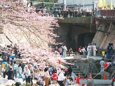 sakura_festival.jpg