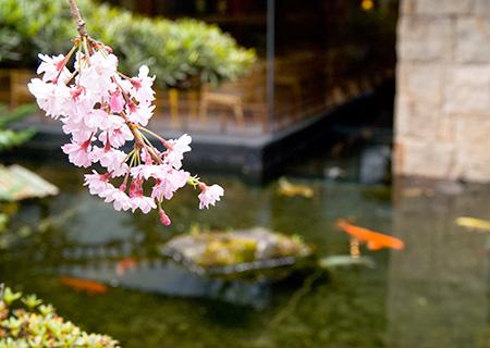 春のイメージ.jpg