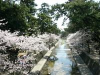 夙川公園14.JPG