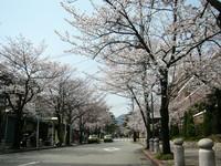 関西学院前・学院花通り3.JPG