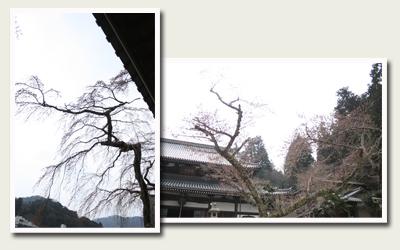 20120410善福寺 温泉寺.jpg