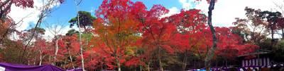瑞宝寺公園141104-2.jpg