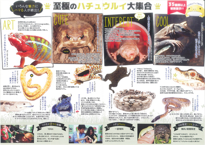 爬虫類展-2.jpg