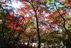★瑞宝寺公園40(ブログ用).jpg