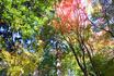 ★瑞宝寺公園43(ブログ用).jpg
