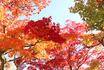 ★老松庭園3(ブログ用).jpg