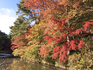 森林植物園6(ブログ用).jpg