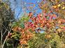 森林植物園8(ブログ用).jpg