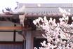 2020林渓寺の梅2(ブログ用).jpg