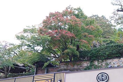 ★善福寺(ブログ用).jpg