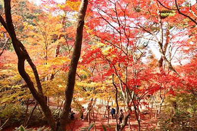 ★瑞宝寺公園50(ブログ用).jpg