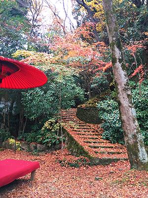 ★瑞宝寺-紅葉階段(ブログ用).jpg