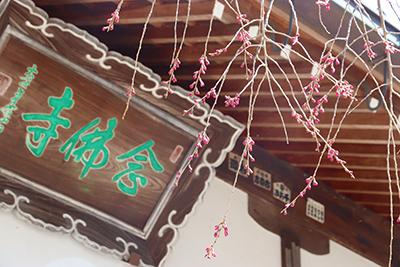 ★0326念仏寺(ブログ用).jpg