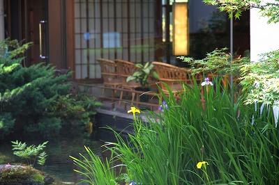 9階庭園菖蒲の花.jpg