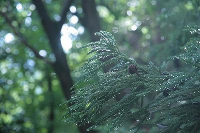 雨上がりのイチ枚.jpg