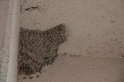 コシアカツバメの巣.jpg
