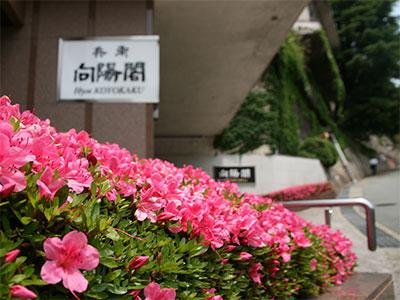 兵衛向陽閣-玄関のつつじ2.jpg