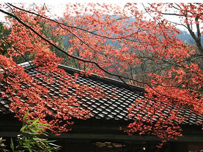 兵衛向陽閣-紅葉だより20151122-瑞宝寺公園2.jpg