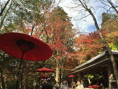 兵衛向陽閣-紅葉ブログ20151111-2瑞宝寺公園.jpg