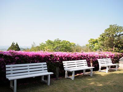 兵衛向陽閣-10F庭園-つつじ2.jpg