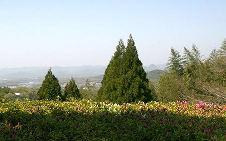 兵衛向陽閣_10階庭園20180420.jpg