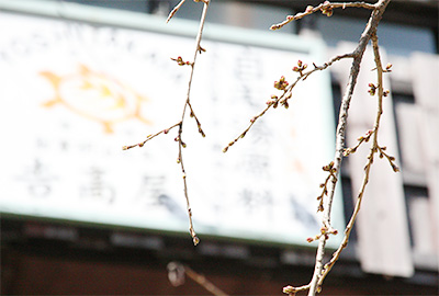 吉高屋-桜.jpg
