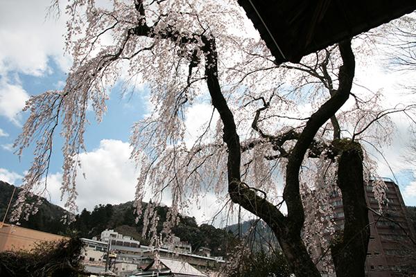 善福寺blog用.jpg