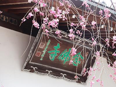 念仏寺200331.jpg