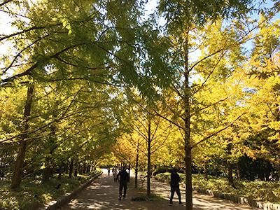 森林植物園1(ブログ用).jpg