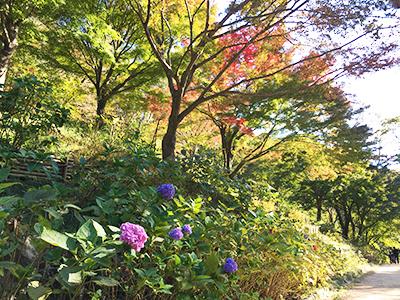 森林植物園2(ブログ用).jpg