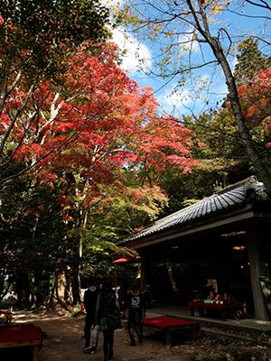 瑞宝寺公園141104-3.jpg