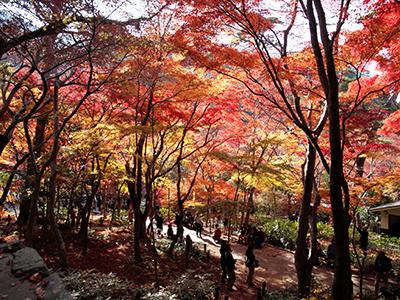 瑞宝寺公園141123-1.jpg