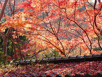 瑞宝寺公園141123-2.jpg