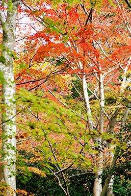 瑞宝時公園-4.jpg