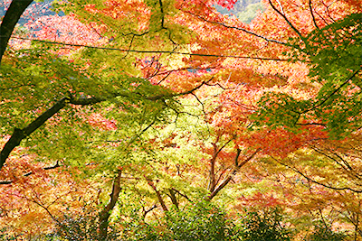 瑞宝時公園1108.jpg