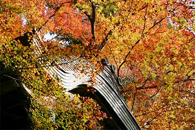 瑞宝時公園1118-2.jpg