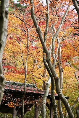 瑞宝時公園1118-5.jpg