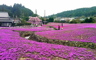 花のじゅうたん.jpg