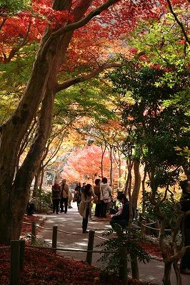 瑞宝寺公園 木々のトンネル.jpg