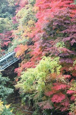 万年橋より.jpg