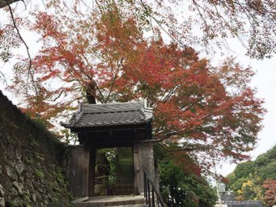 兵衛向陽閣-紅葉だより20151122-善福寺.jpg