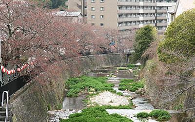 桜だより2017_川沿いの桜.jpg