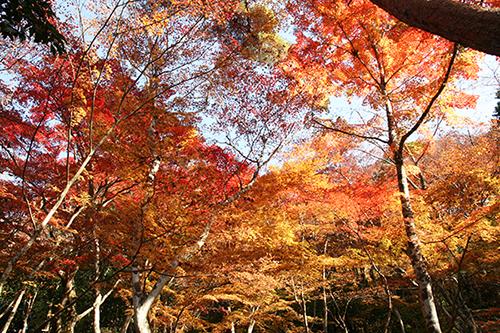 20161118瑞宝寺公園.jpg