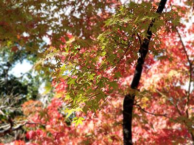瑞宝寺公園141026-1.jpg