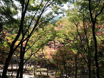 瑞宝寺公園141026-2.jpg