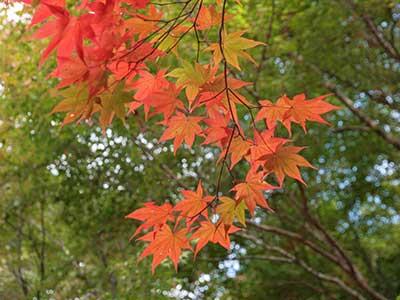 瑞宝寺公園141104-1.jpg