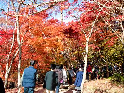 瑞宝寺公園141116-1.jpg