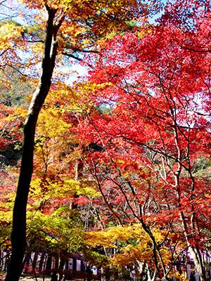 瑞宝寺公園141116-2.jpg